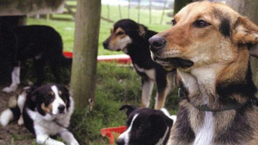 Kiwi avoidance dog training