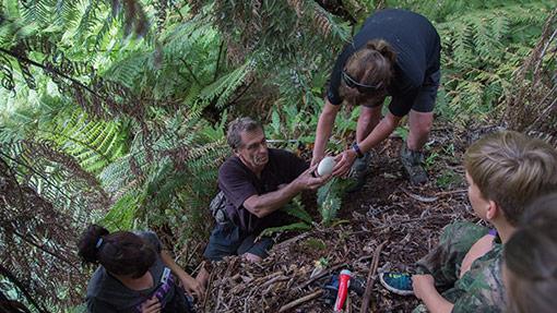 Lifting kiwi eggs